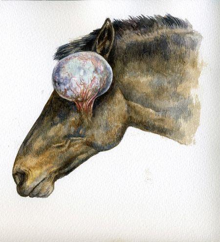 Horseeyesm