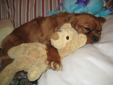 Benny & Bear