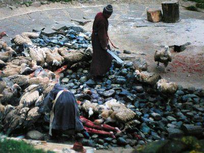 Tibetbuitresgeneral