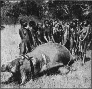 Kavirondo_women_hauling_hippo_small