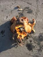 Pigs_head_on_fire